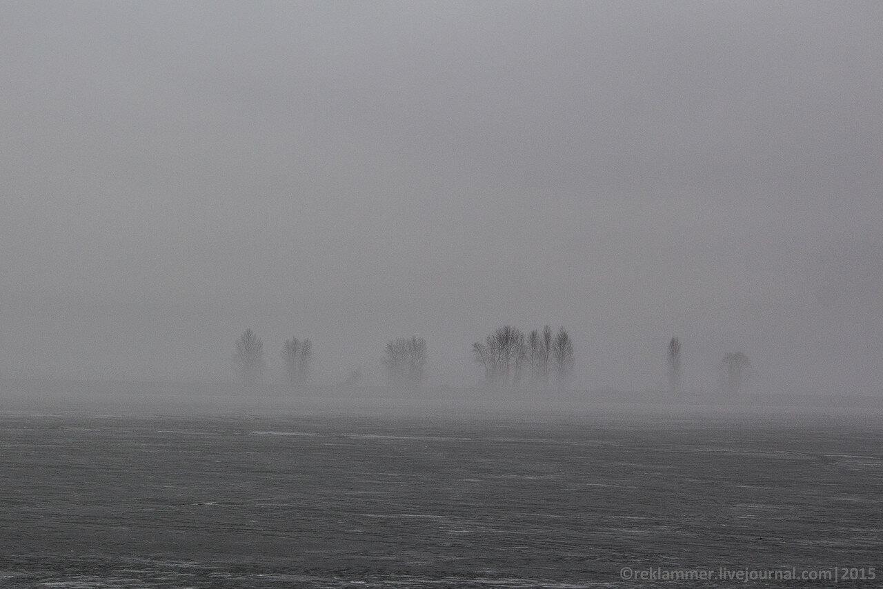 Деревья в тумане, деревья на киевском море
