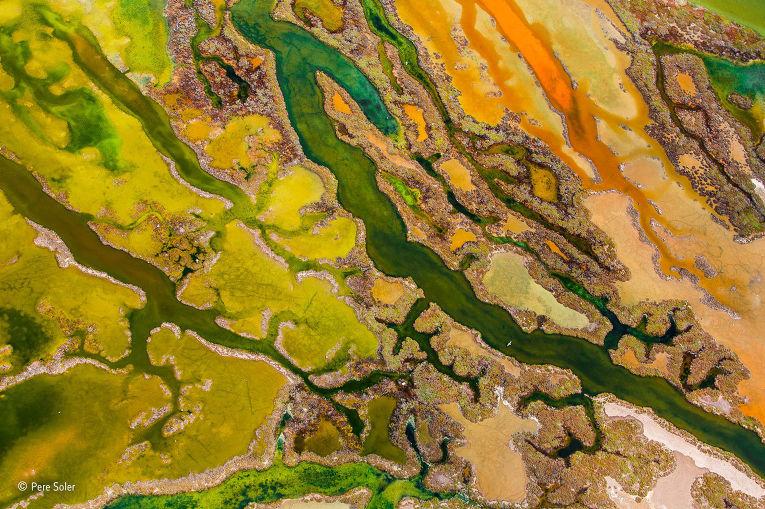 7. Пере Солер (Испания), «Живопись водорослей». Победитель в категории «С воздуха». Солер запечатлел