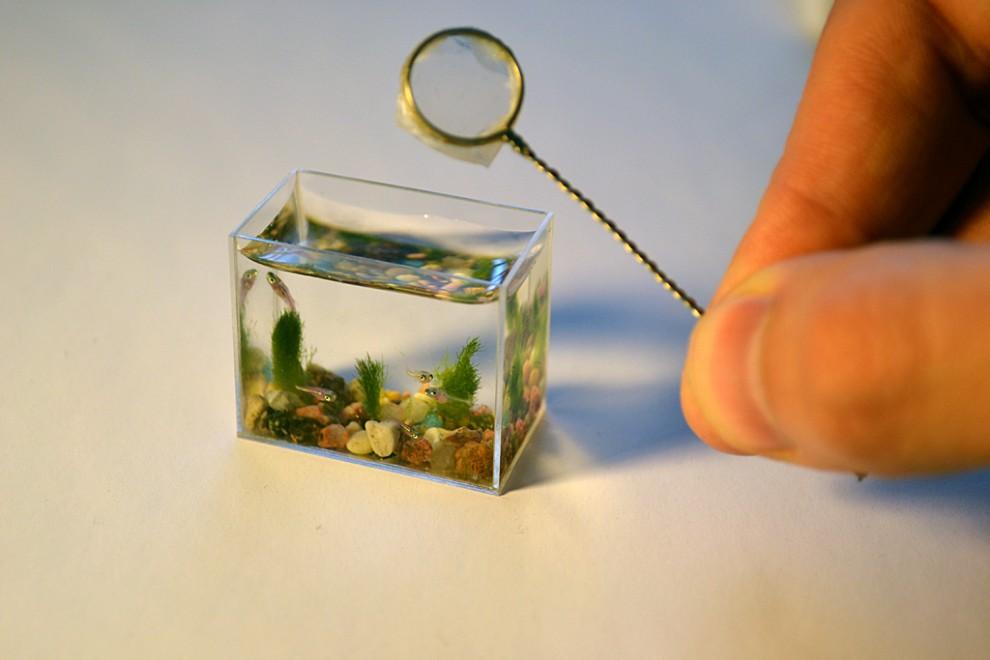 1. Этот малюсенький аквариум сделан из стеклопластика, на дне растут живые водоросли, и рыбки в нем