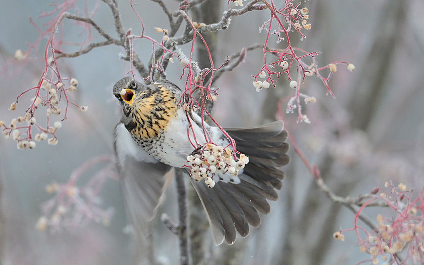 Дикая природа, кадры за 2014 год