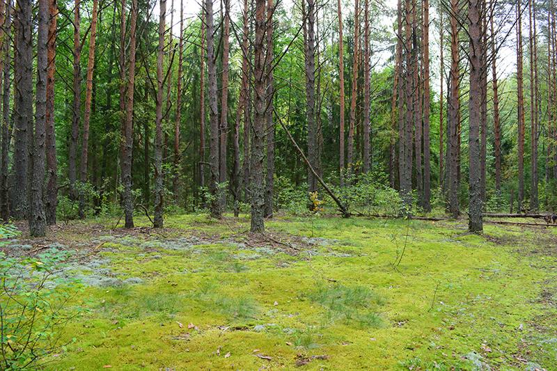 осень 15 лес3