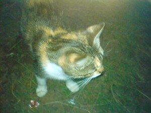 Кошечка на берегу озера Ильмень в Новгородской области