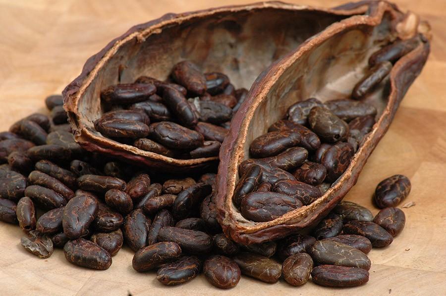 9. Для производства 450 граммов шоколада требуется 400 бобов какао.