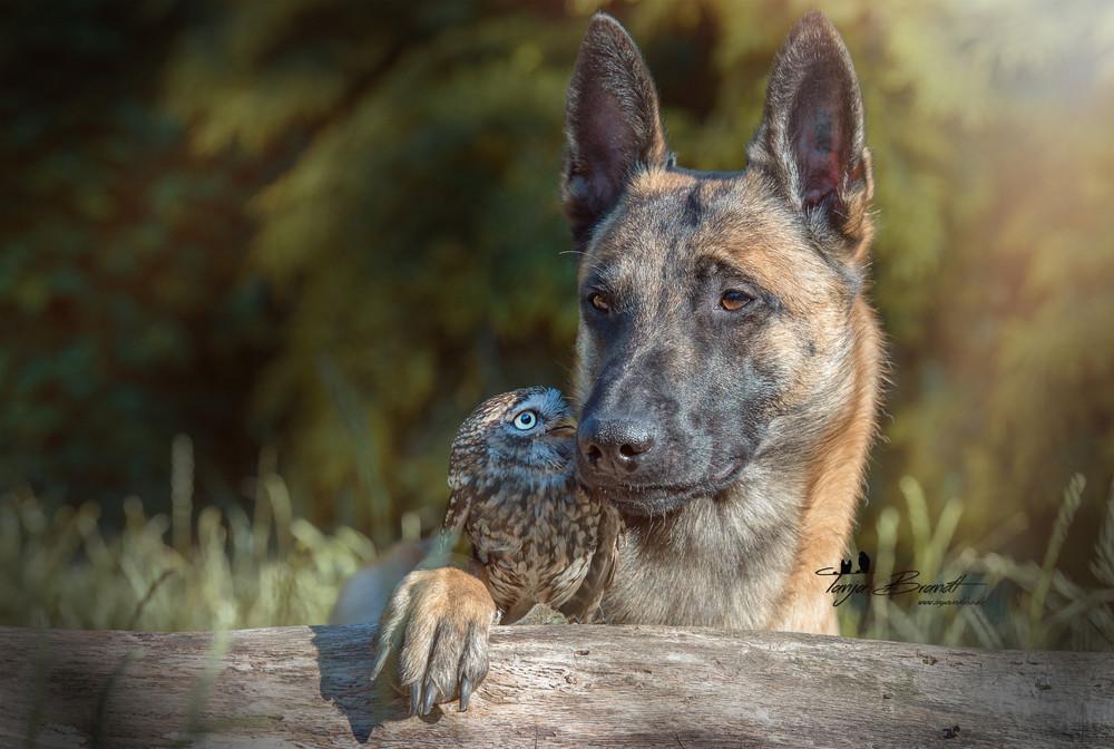 Такая милая дружба пса и совушки