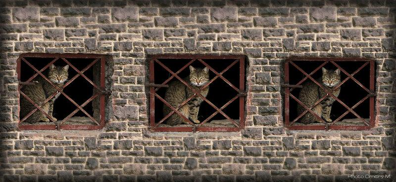 Кошки & Коты (2015)