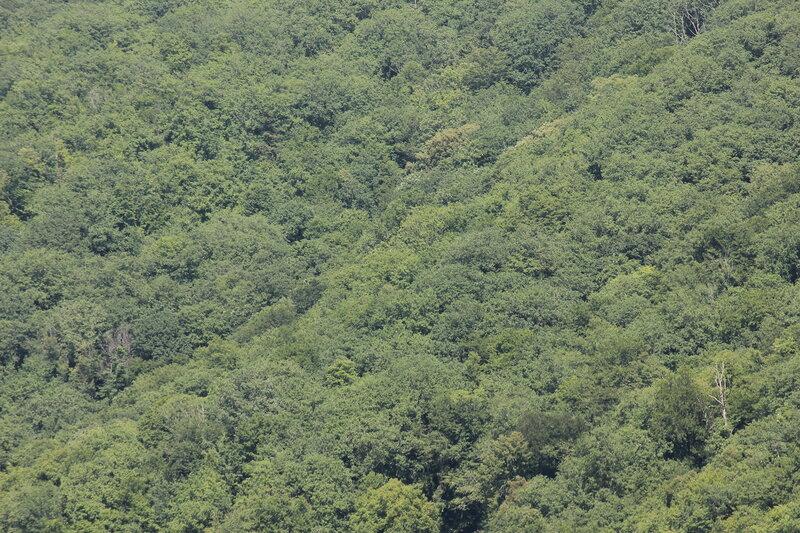 Лесные горы