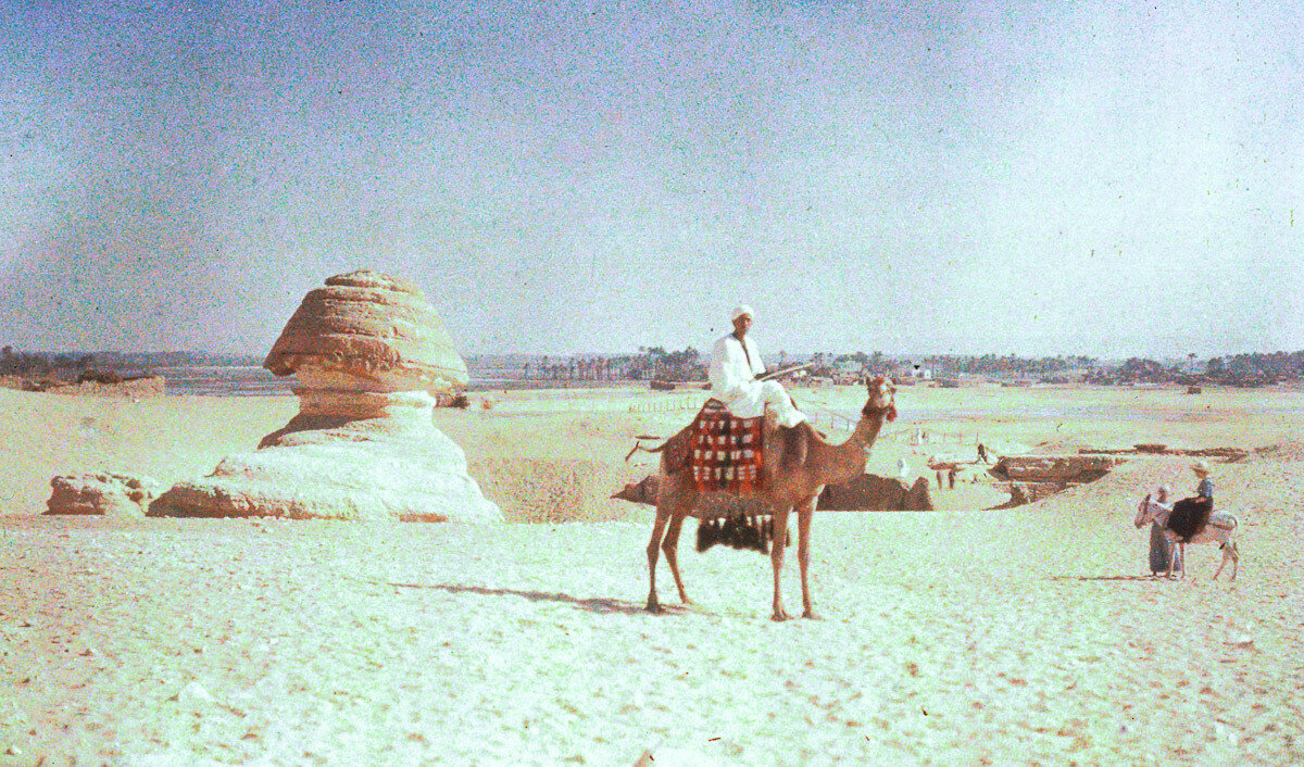 1913. Сфинкс и верблюды