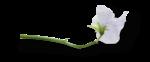natali_design_baby11_flower13-sh2.png