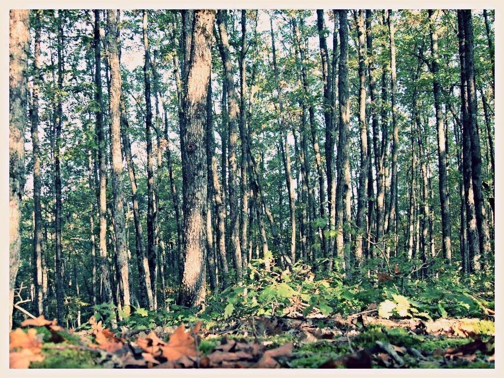 12 октября 2008, под Горячим Ключом, лес (96).JPG