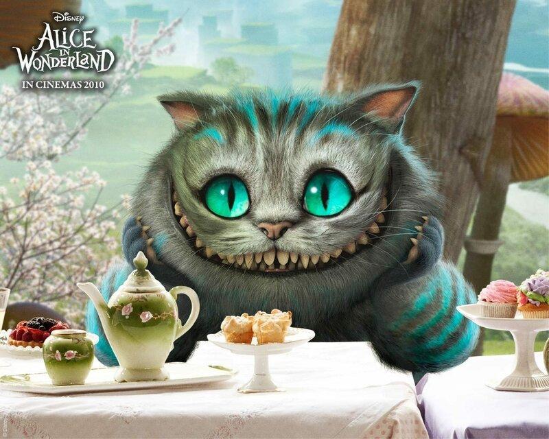 что делать при отравлении кошки едой