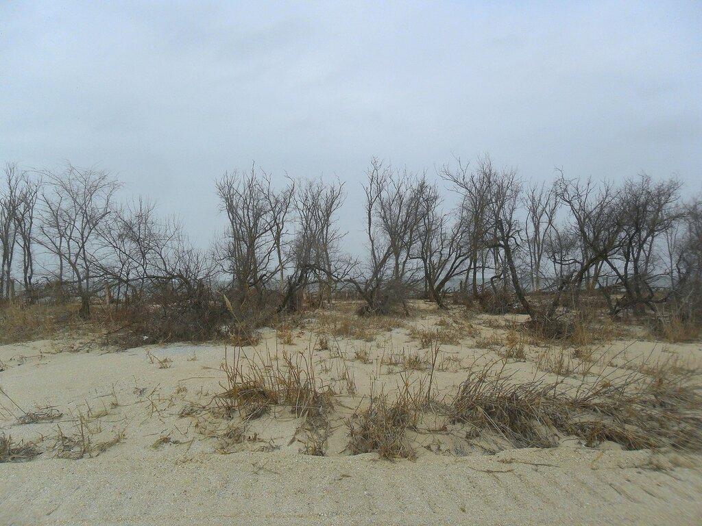 На берегу зимнем, морском ... SAM_5589.JPG
