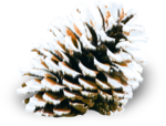 mzimm_snow_wonder_pinecone_sh.png