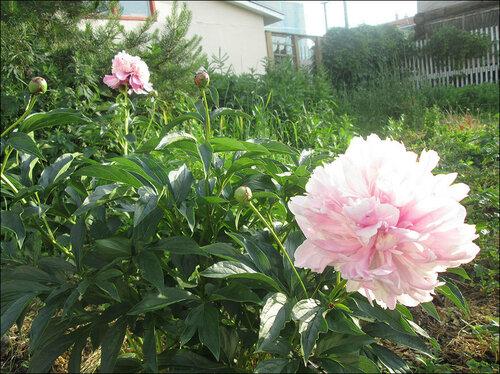 Цветы-2.jpg