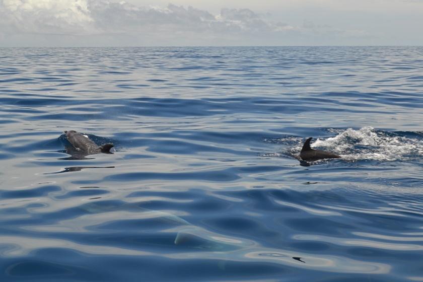 Дельфины у побережья Венесуэлы. Красивые фотографии 0 141a54 e44f24e0 orig