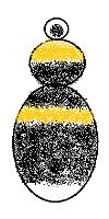 Bombus lucorum female