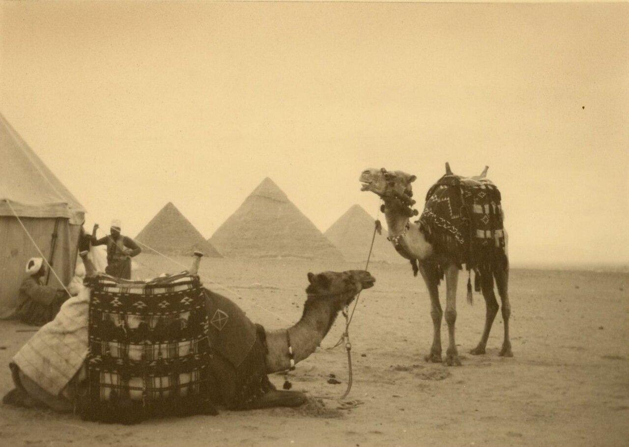 Гиза.  Туареги с верблюдами на фоне пирамид