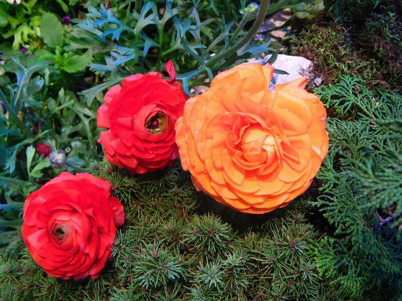 Весенняя выставка цветов.