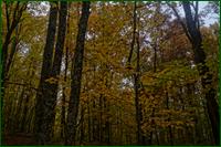 http://img-fotki.yandex.ru/get/15569/15842935.1f6/0_d9f67_df1265b8_orig.png