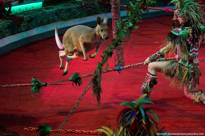 Зима. Королевский цирк. 20.02.15.35.Африка..jpg