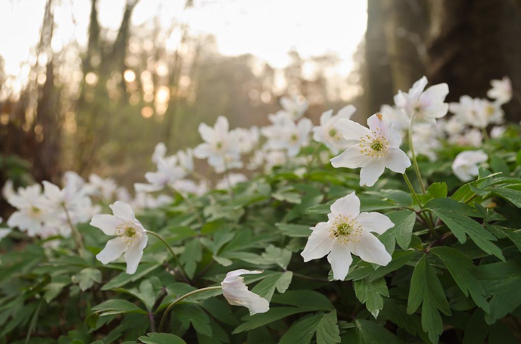 6. Как уже хочется весеннего солнышка! Примеры фото, полученного на Nikon D5100 KIT 18-55