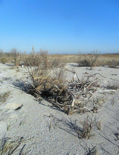 На песках, в ноябре... SAM_4592.JPG