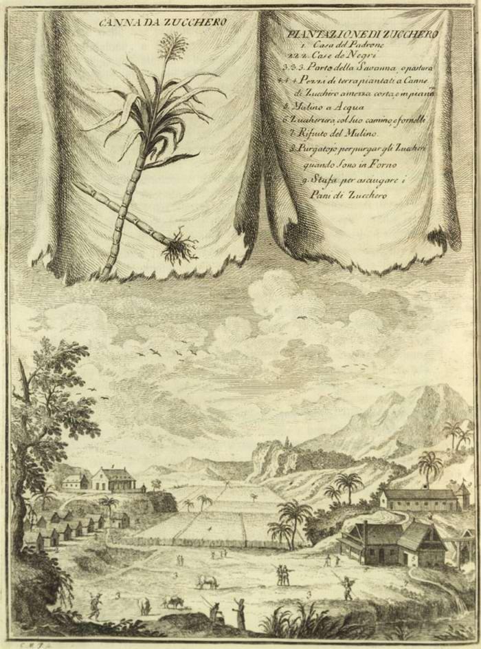 Вид на плантацию сахарного тростника (Французская Вест-Индия, 1762 год)