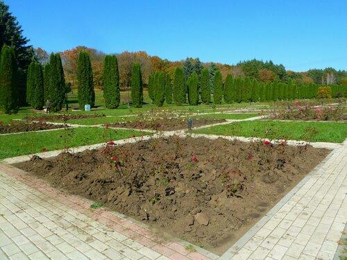 Розы окучали, подготовка к зиме, 80 сортов разных роз.