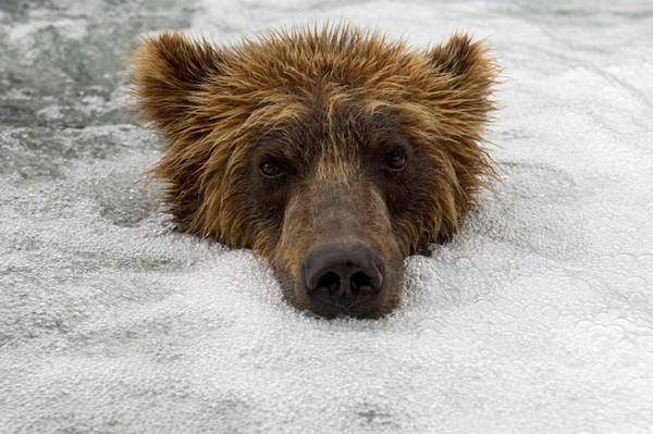 Фотографии животных отлучших фотографов анималистов России 0 145e38 6291425b orig