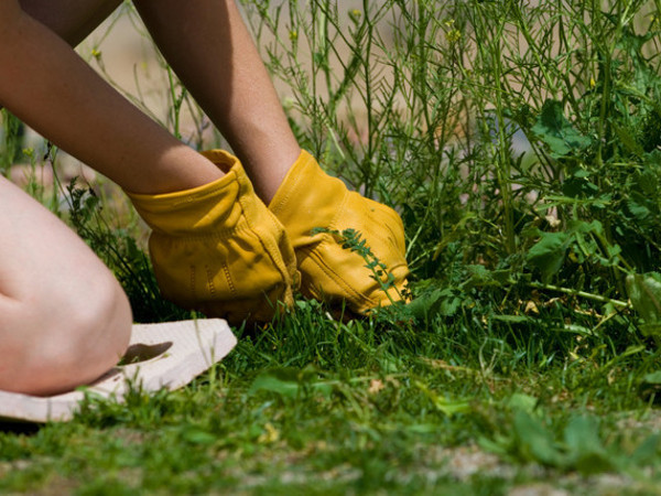 методы борьбы с сорняками