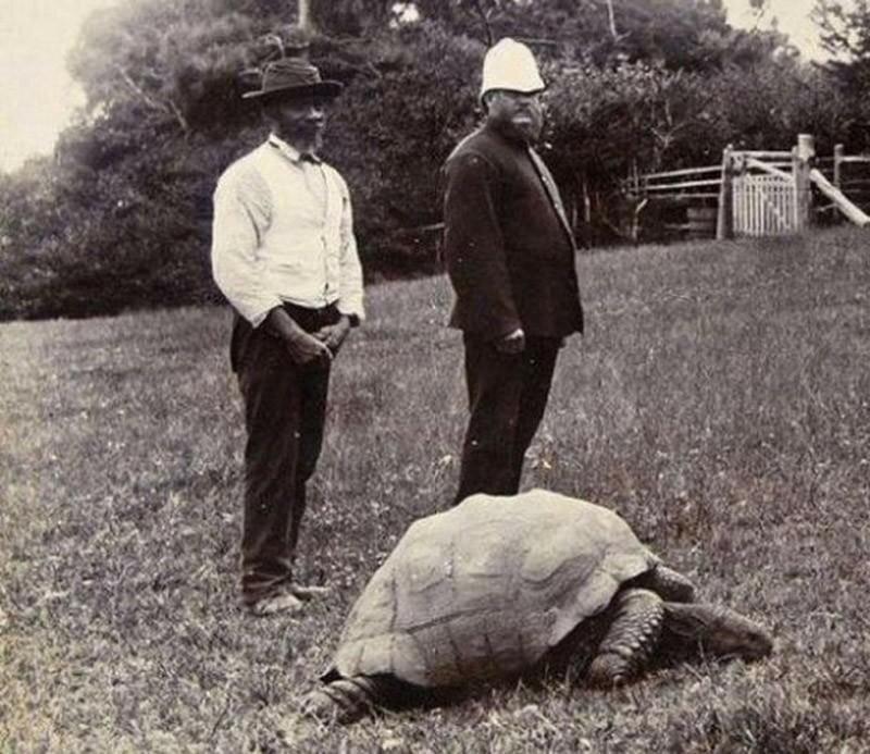 Это Джонатан, 182-летняя гигантская черепаха с острова Св. Елены