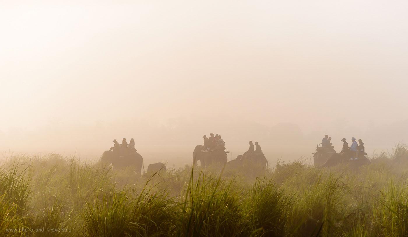 Сафари верхом на слонах в Индии. Читайте отзыв о поездке в национальный парк Казиранга осенью 2015 года.