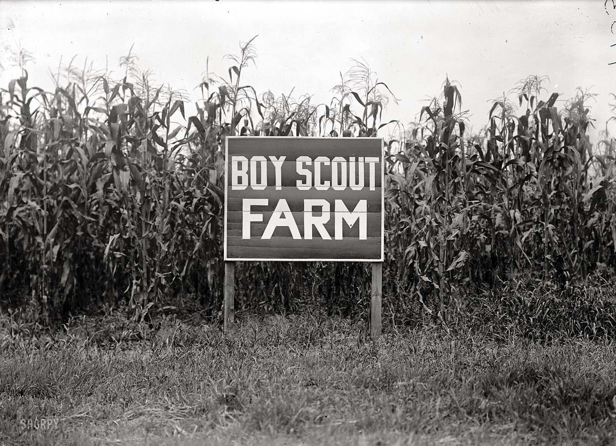 Американские бойскауты начала 20-го века на снимках фотографов (19)