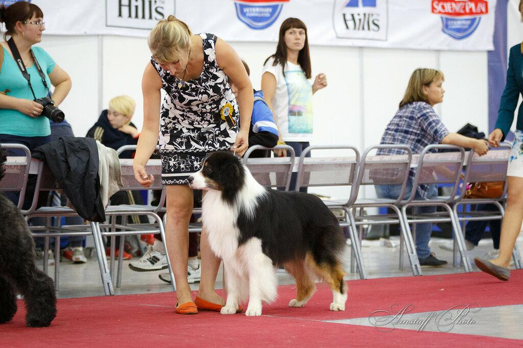 Выставочные успехи наших собак - 5 - Страница 29 0_1252cd_6990067b_XXL