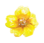 YELLOW_FLOWER.png