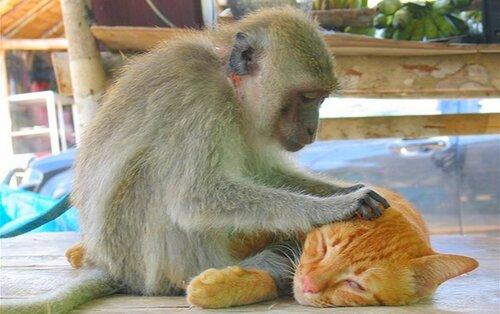 Тема любви (фото котов из интернет)