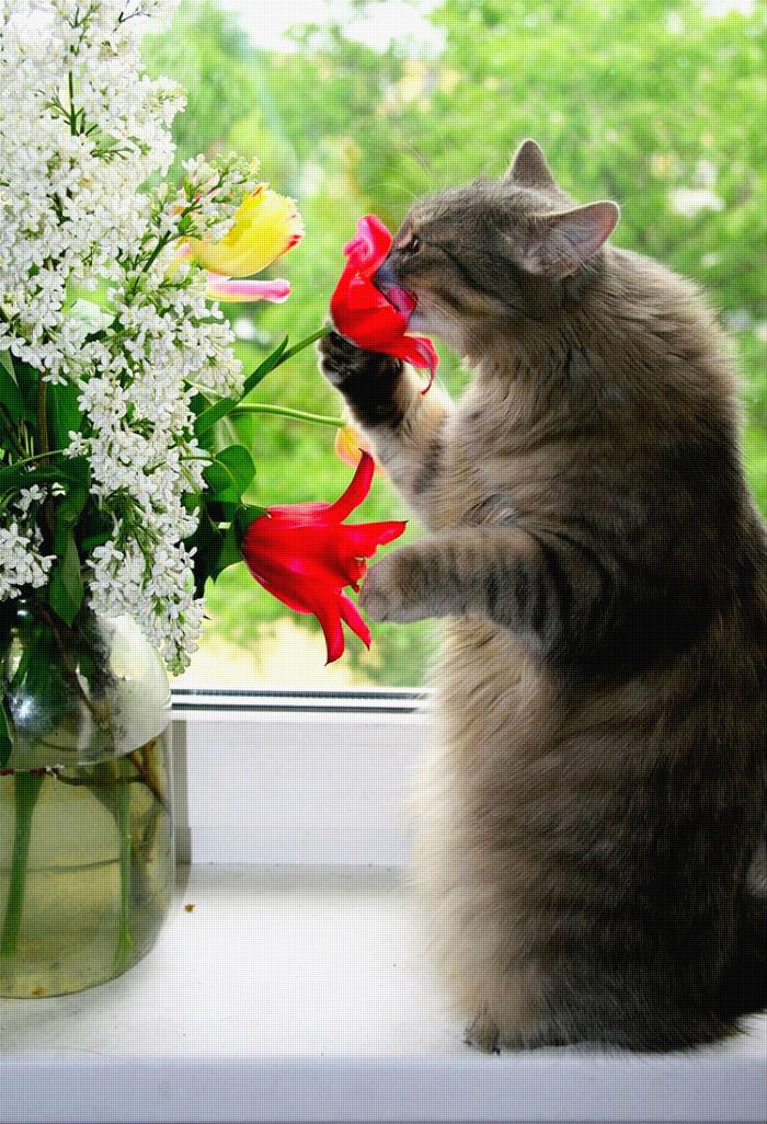 Кошки и их волшебные свойства...
