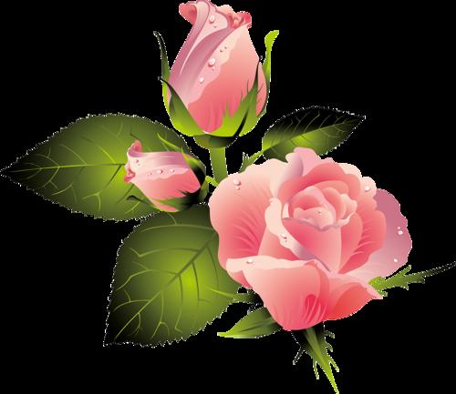 Pink Rose #2 (80).png