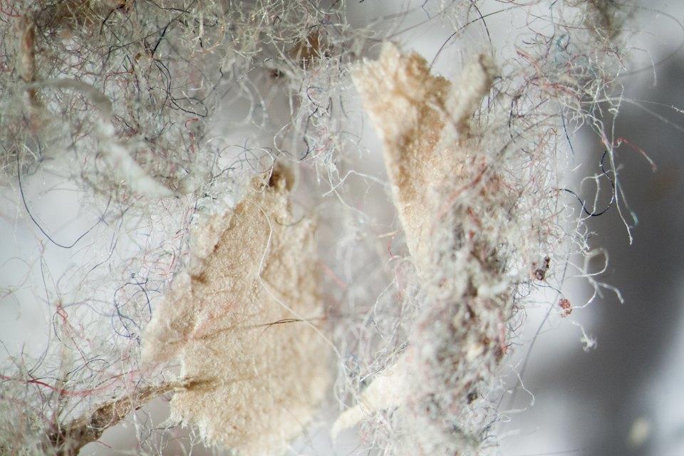 Kak-vyglyadit-vasha-domashnyaya-pyl-pod-mikroskopom-6-foto