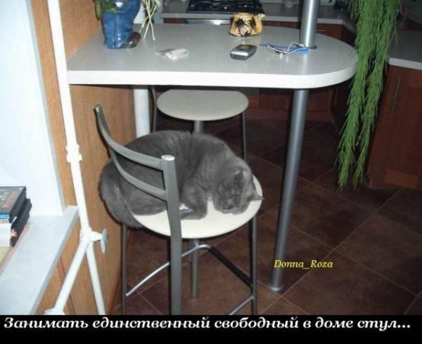 Что должны делать коты дома