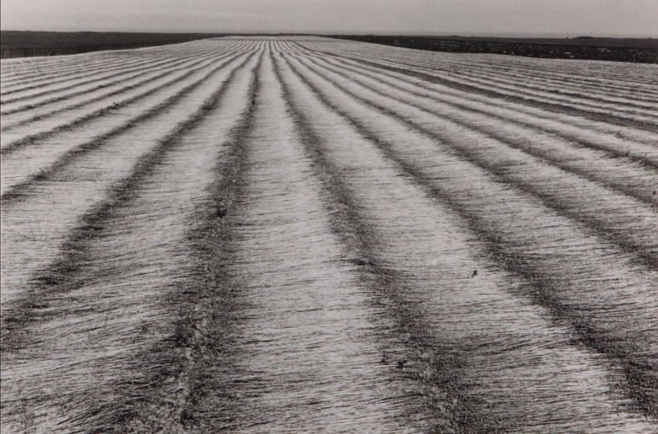 1978. Поле льна, Нормандия, Франция