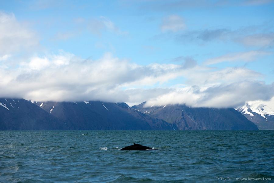 6. Дороги Нордюрланда и киты залива Скъяльфанди.