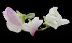 natali_design_baby11_flower12-sh2.png