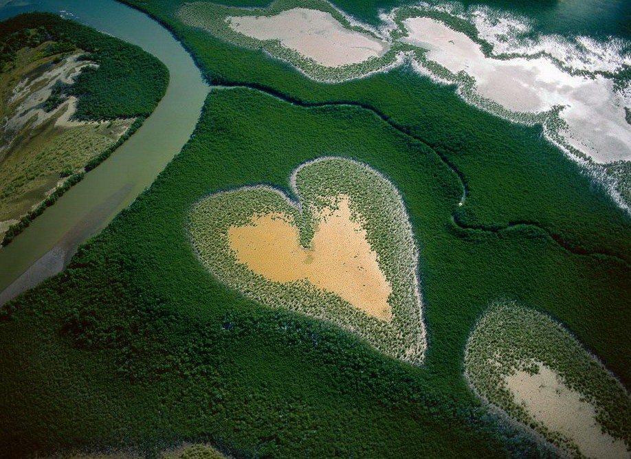21. Сердце из мангровых деревьев в Новой Каледонии.
