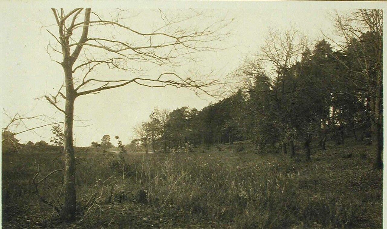 24. Вид части Старосельского леса близ р. Днепра