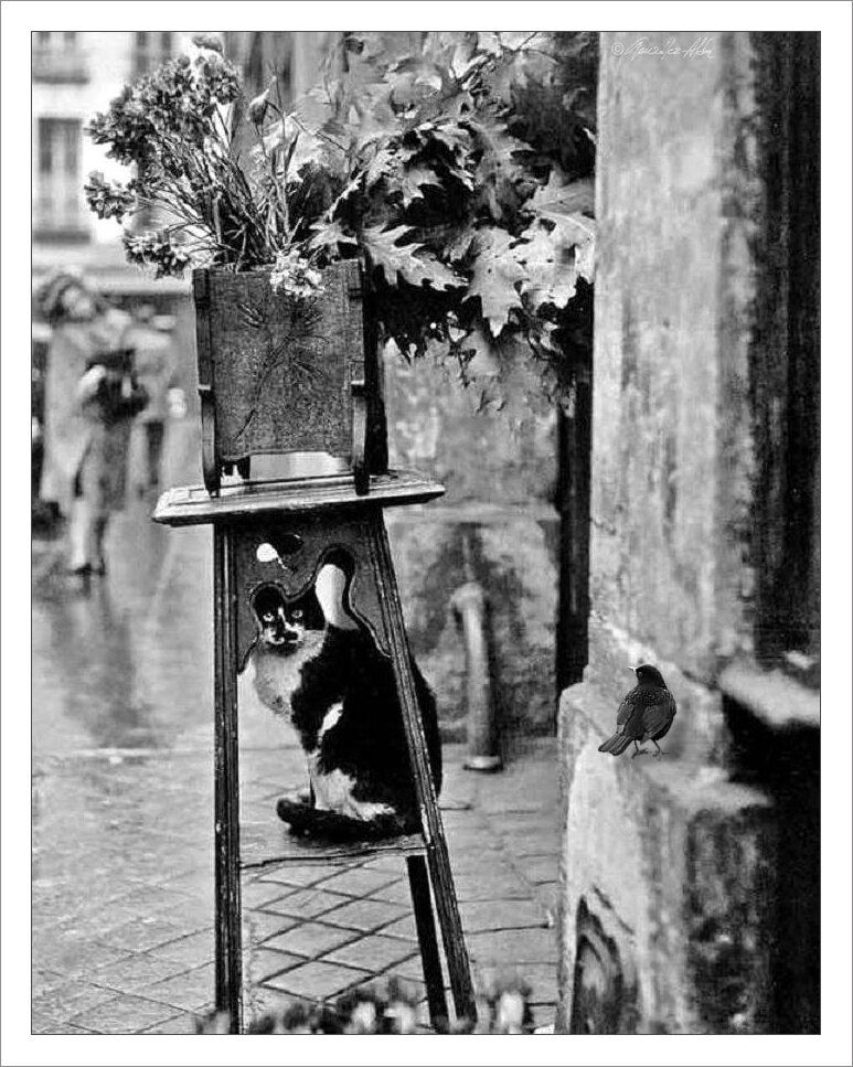 1979. Кошка флориста