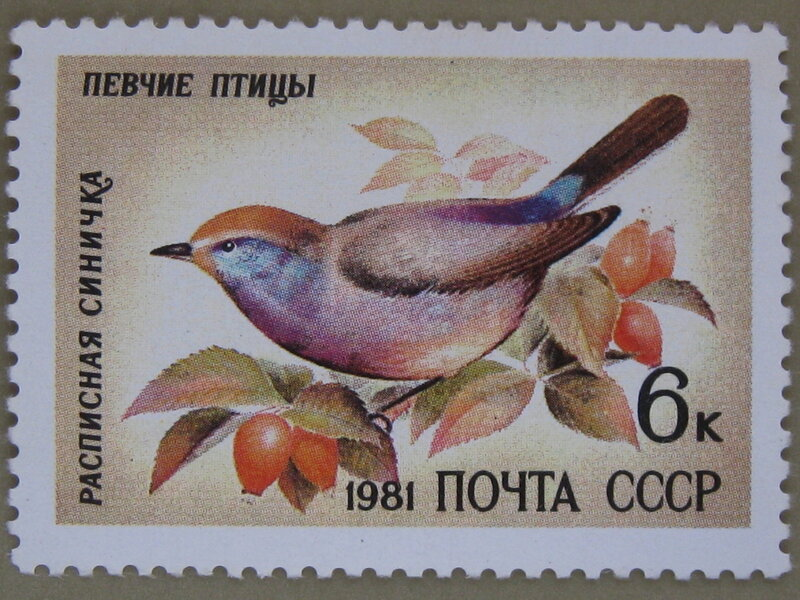 Расписная синичка (Leptopoecile sophiae).