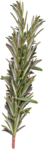 sd_woodland-winter-foliage2.png