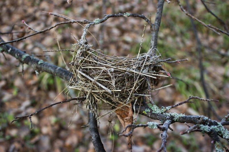 гнездо на ветке