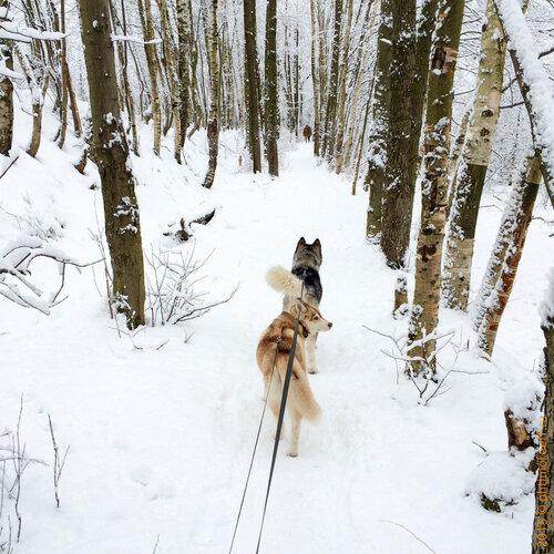 Юнтоловский заказник, зима 2015