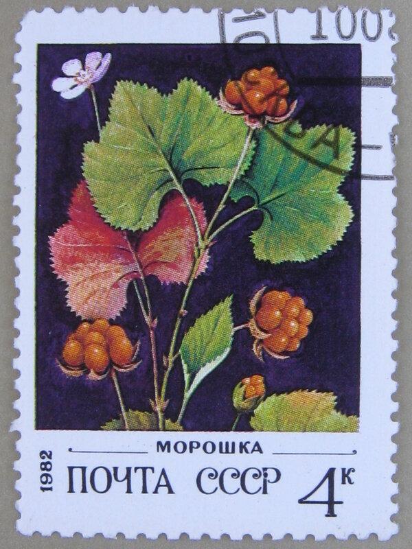 Морошка (Rubus chamaemorus).